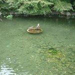 徳川園内の池。
