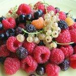 Freshly-picked organic berries for breakfast