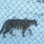 big cat :)
