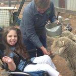 The friendly sheep hand fed grain around Imogen. She loved their Baa's!