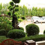 Nice tree figure in Hotel