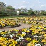 Saiko Doman Green Park