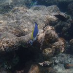 Snorkeling in Olhuveli
