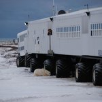 The Great White Bear Lodge..our hotel on the tundra with 24/7 views and chances of sightseeing.