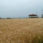 fields nearby