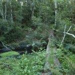 Sendero en el bosque/path in the forest