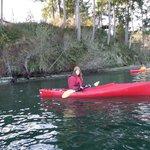 Kayaking on the Sound