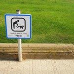 Собакам следует быть осторожнее