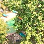 Swimmingpool in the garden