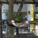 Macaws in the central area by the snack bar
