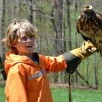 Falconry at The Homestead