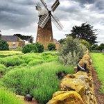 Windmill at Oatlands