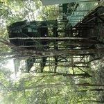Casa do Tarzan