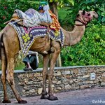Camel Ride in the hotel