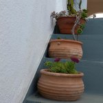 Pretty potted plants along the stairs