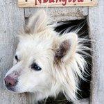 Emergency cabin for huskies