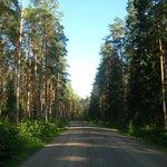 Uno dei tanti meravigliosi boschi