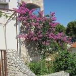 Photo de Villa Amelia & Adelina