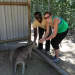 feeding and enjoying the kangaroos on the property