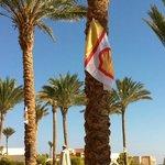 Palmier avec drapeau Shell