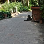 Cat in the courtyard