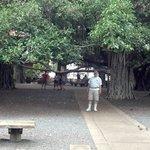 Greg under the Banyon Tree