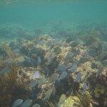 Snorkeling at reef at resort