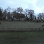 Horses outside our bedroom window