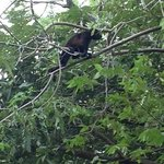 We were making our way out to the beach then we look up by the trees next to our hotel, & MONKEY