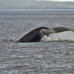 queue baleine 3