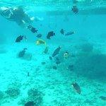 Swimming among the fish