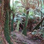Hardy gully walk