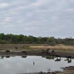A reserva é repleta de animais das mais variadas espécies.