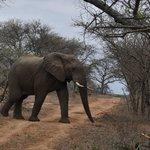 Uma emoção ver os elefantes de aproximando do jeep.