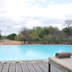 A piscina é um local de relax depois dos safáris.