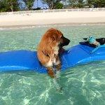 My dog enjoys the beach as much as I do!