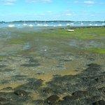 Golfe du Morbihan: Francia: basa marea
