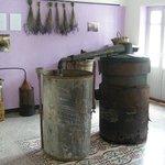 Museo della Lavanda