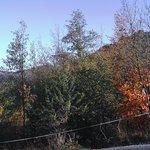 i colori del bosco in autunno