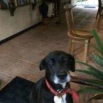 Bassam, the lodge dog