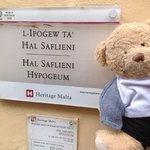 bear visits the hypogeum