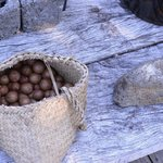 Fresh Macadamias