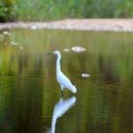 Egret near hotel