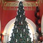 christmas tree qvb 2013