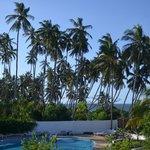 une palmeraie au bord de l'eau