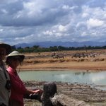 An amzaing view of wild animals at the Hippo pool in Mikumi