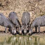 Watu Safaris - Day Tours