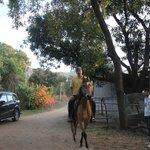 Farm of the Maharana