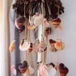 The sea shell wind chimes sound so beautiful with a gentle ocean breeze. Zzzzz!