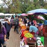 Fruit Stalls @ Doi Tung
